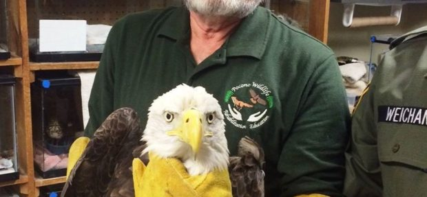 Prayers please for this beautiful bald eagle