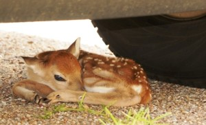 Caring for Orphan Animals of the Wild
